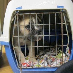 Ein Hundewelpe sitzt verängstigt in einer Transportkiste.