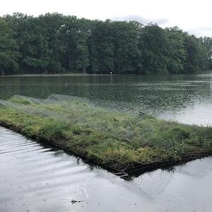 Auf dem Adenauer Weiher in Köln schwimmt jetzt eine Pflanzeninsel.