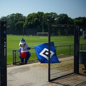 HSV-Maskottchen Dino Herrmann am 18. Juni beim Trainingsauftakt mit HSV-Fahne.