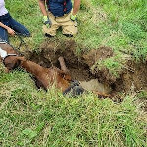 Das Pferd war so tief in dem Loch in Bergisch Gladbach-Herkenrath gefangen, dass schweres Gerät notwendig war.