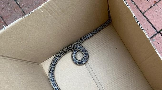 In Schauenburg-Martinhagen hat eine Frau beim Rausstellen der Mülltonne eine Python entdeckt.