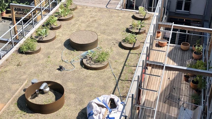 Der Dachgarten der Loftwohnungen ist noch nicht vollständig bewachsen.