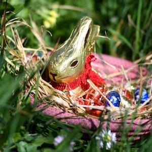 Ein Lindt-Osterhase sitzt in einem pinkfarbenen Nest mit Schokoeiern im Gras.