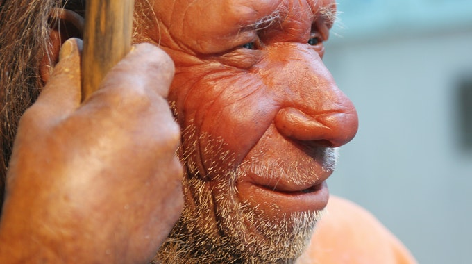 Die Nachbildung eines Neandertalers im Neanderthal Museum in Mettmann.