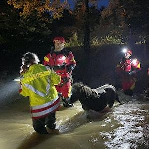 Mitarbeiter der Essener Tierrettung ziehen ein Pony durch das Hochwasser im Kreis Düren.