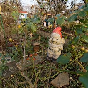 Ein Gartenzwerg steht in einer Kleingartenanlage in Köln