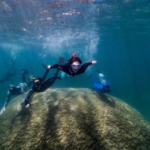 Wissenschaftler schwimmen über die gewaltige Riesenkoralle im australischen Great Barrier Reef.