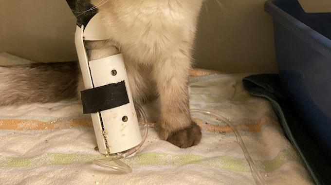 Eine sichtlich angeschlagene Katze mit einem Bein in einer Schiene.