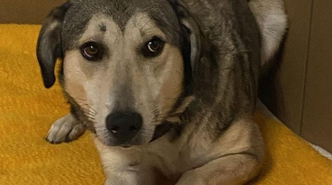Ein Hund liegt auf einer Decke.