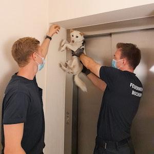 Zwei Feuerwehrmänner befreien am 6. September 2021 an einer Aufzugstür in Bochum einen Hund aus einer misslichen Lage.