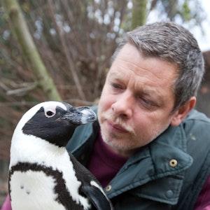 Tierpfleger Peter Vollbracht betrachtet im Allwetterzoo Münster am 6. November 2009 das Brillenpinguin-Weibchen Sandy. Der bei den Zoo-Besuchern beliebte und aus dem Fernsehen bekannte Pinguin ist im Alter von 25 Jahren gestorben.