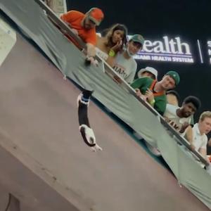 Eine Katze hängt am Oberrang im Footballstadion in Miami