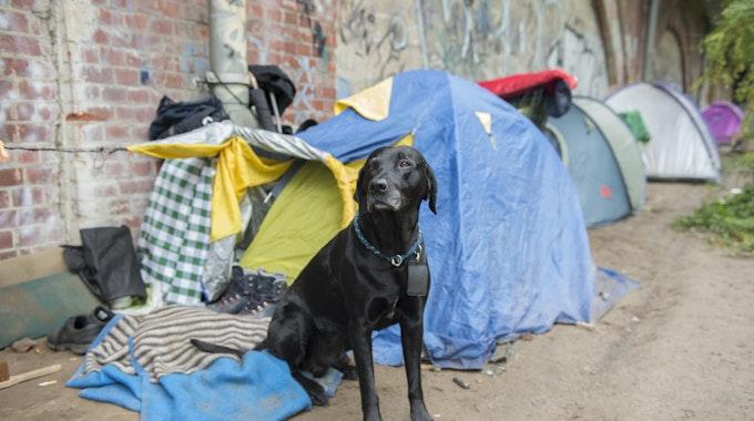 Bei einem Überfall wurde am 10. September 2021 in Essen der Hund eines Obdachlosen gestohlen. Unser Symbolbild von 2017 zeigt Pogo, den Hund eines Berliner Obdachlosen.