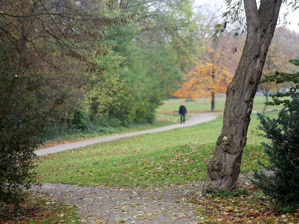 Blick in ein Waldstück, im Hintergrund Fußgänger.