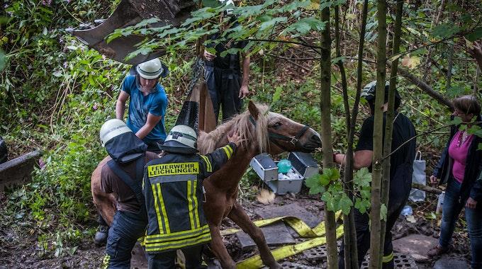 In Leichlingen wurde am 16. September 2021 ein Pferd aus einer Böschung gerettet.