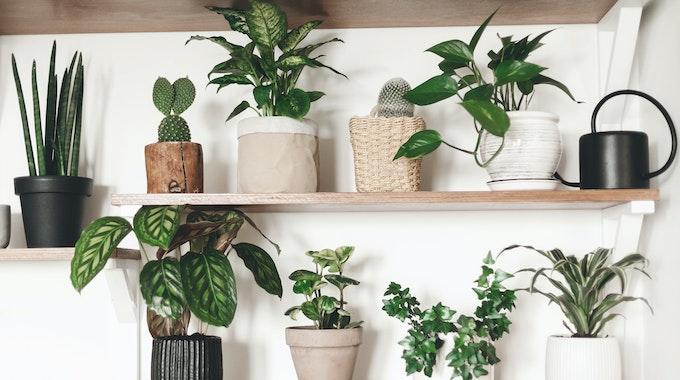 Auch für dunkle Wohnungen gibt es die passenden Zimmerpflanzen.