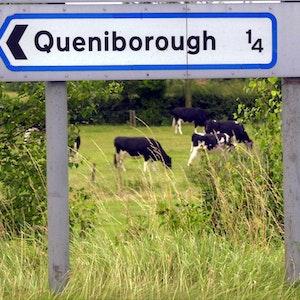 """Kühe stehen auf einer Weide in der englischen Ortschaft Queniborough, bekannt als """"BSE-Dorf""""."""