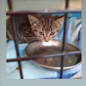 Eine kleine Katze sitzt in einem Käfig vor einem Freßnapf.