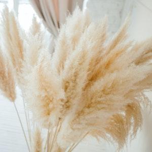 Trockenblumen und Ziergras sind die perfekte Deko für den Herbst. Das beliebte Pampasgras lässt sich ganz einfach selber trocknen.