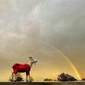 Ein Regenbogen zeigt sich am Himmel, davor eine Figur des FC-Maskottchens Hennes.