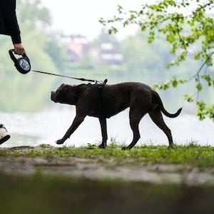 Eine Frau geht mit ihrem Hund Gassi (Archivfoto).