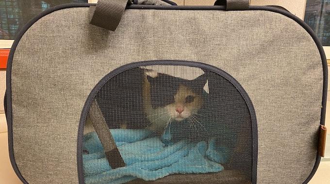 Der Kater sitzt in einer Tasche.