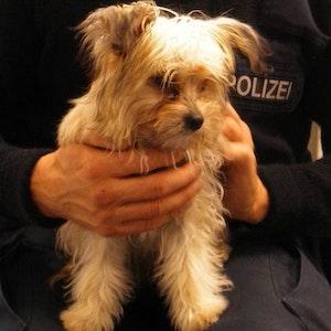 Ein Polizei aus Hamm hält am 9. Oktober einen Hundewelpen, der alleine in einem Regionalzug umherlief.