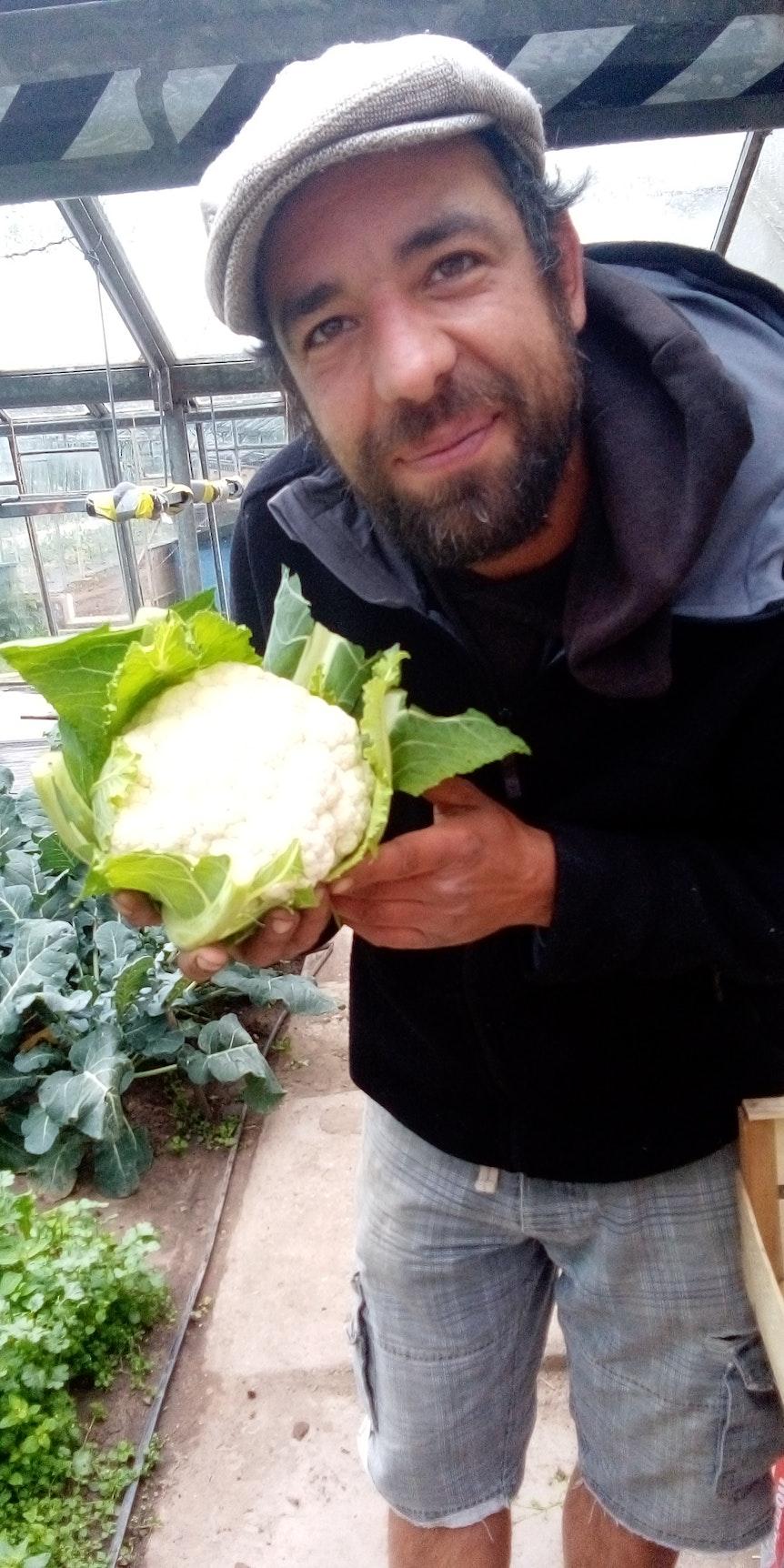 Kölner Gabriel Schmidt mit einem Blumenkohl in der Gärtnerei, in der er arbeitet