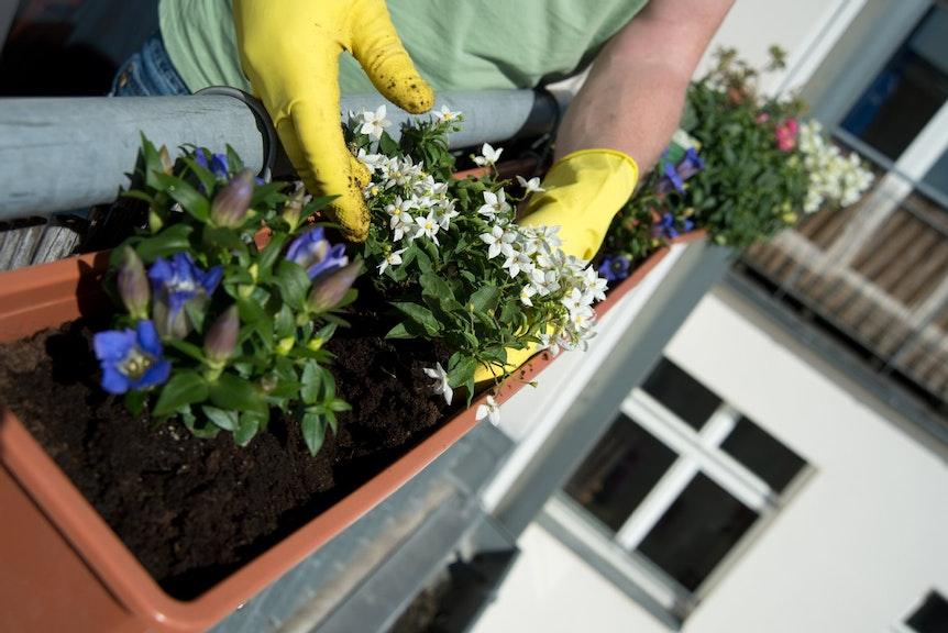 Jedes Jahr ab dem Frühjahr blüht es auf Balkonen und Terrassen. Auch wenn das manchem Vermieter nicht gefällt: Verbieten darf er die Blumenpracht nicht.