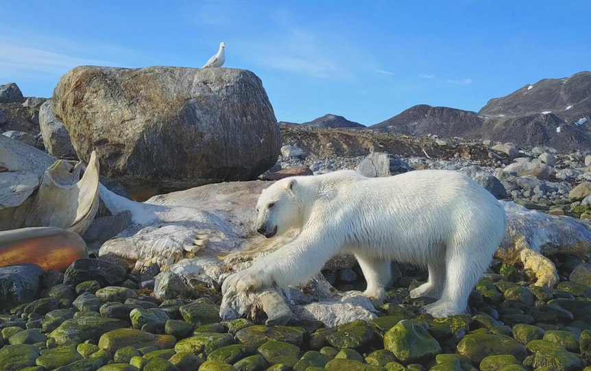 02 Spitzbergen - Eis_lkadaver 300dpi (1)