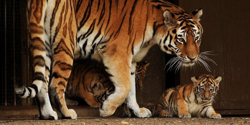 Hanya_tot_Koelner_Zoo