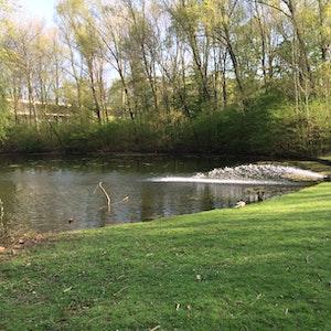 Rheinaue_See_Algen