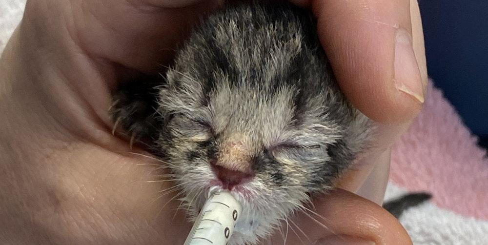 Katzenbaby wird aufgepäppelt