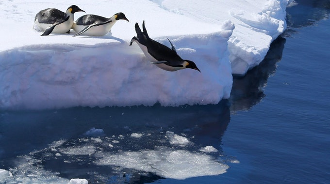 Antarktis_24012021