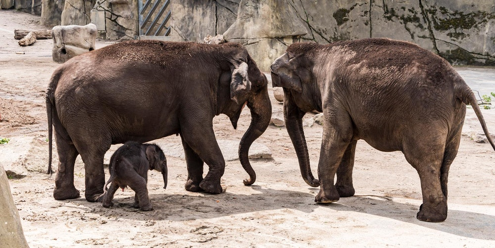 20200618-ARO-ElefantenbabyZoo-16