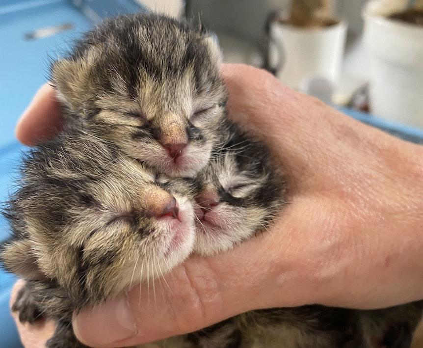 Katzenbaby in Radlager gefunden