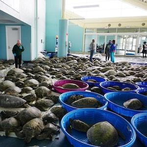 Schildkröten-neu