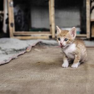 Eine kleine Katze sitzt auf dem Boden.