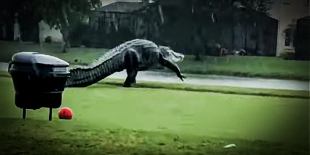 Gator_Golf