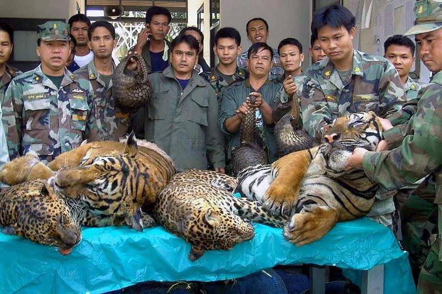 Thailand_Tiger_Markt