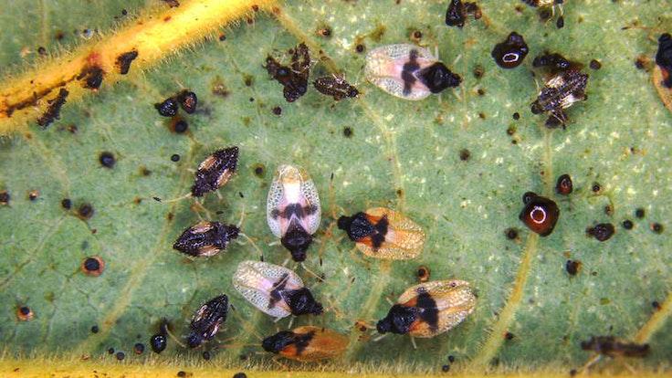 Insekten_Symbolbild_01032020