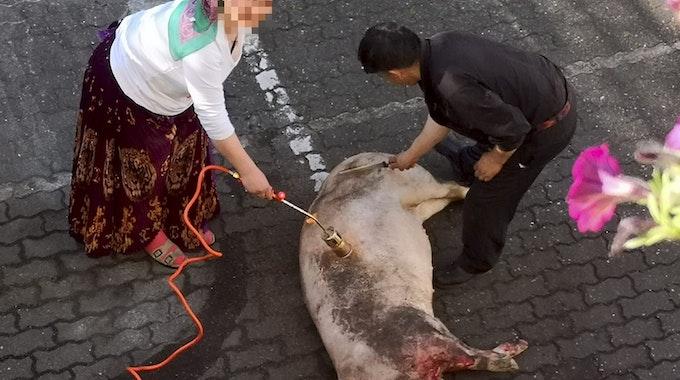 Schwein_geschlachtet