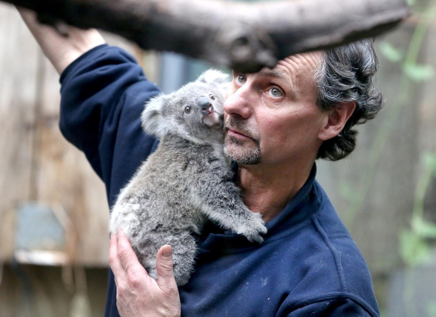 Koala Pfleger Arm